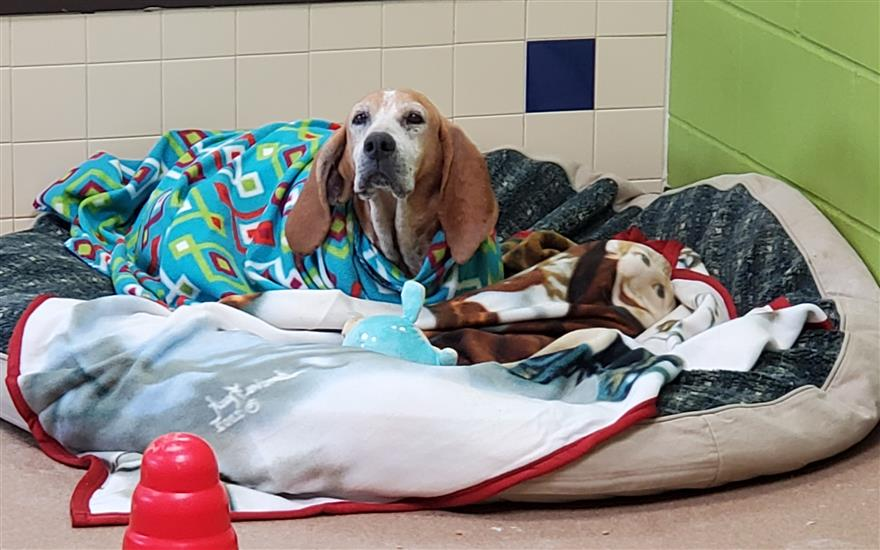 Life-saving Funds for Pets in Need!