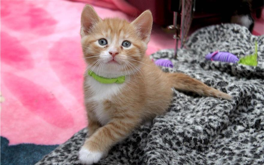 Thank you for helping Paws4ever save kittens!