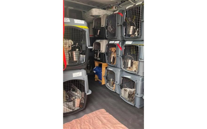 Helping pets in Hurricane Ida's aftermath